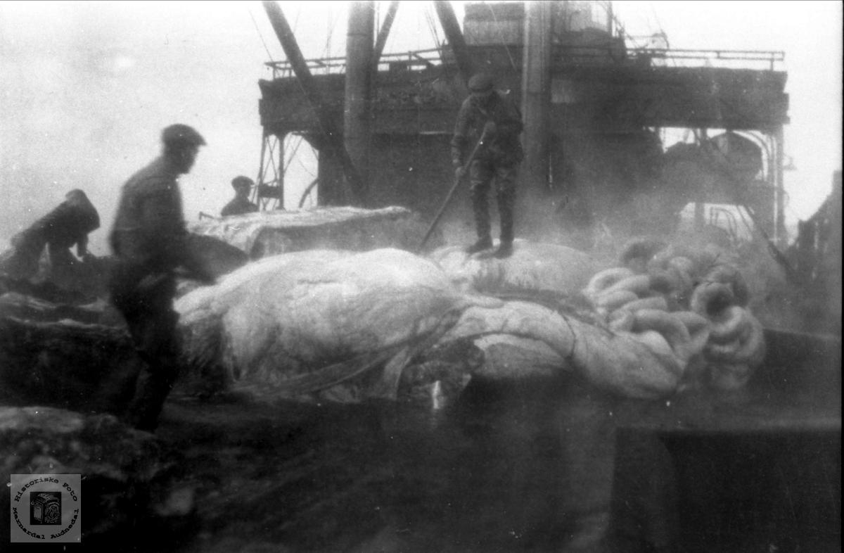Arne Høye senior på hvalfangst i 1930.