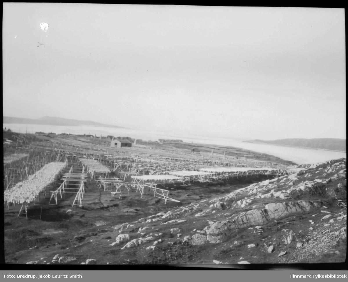 Tørrfisk på hjell, antakelig Vardø.  Oversiktsbilde, i bakgrunnen bygninger og havna.