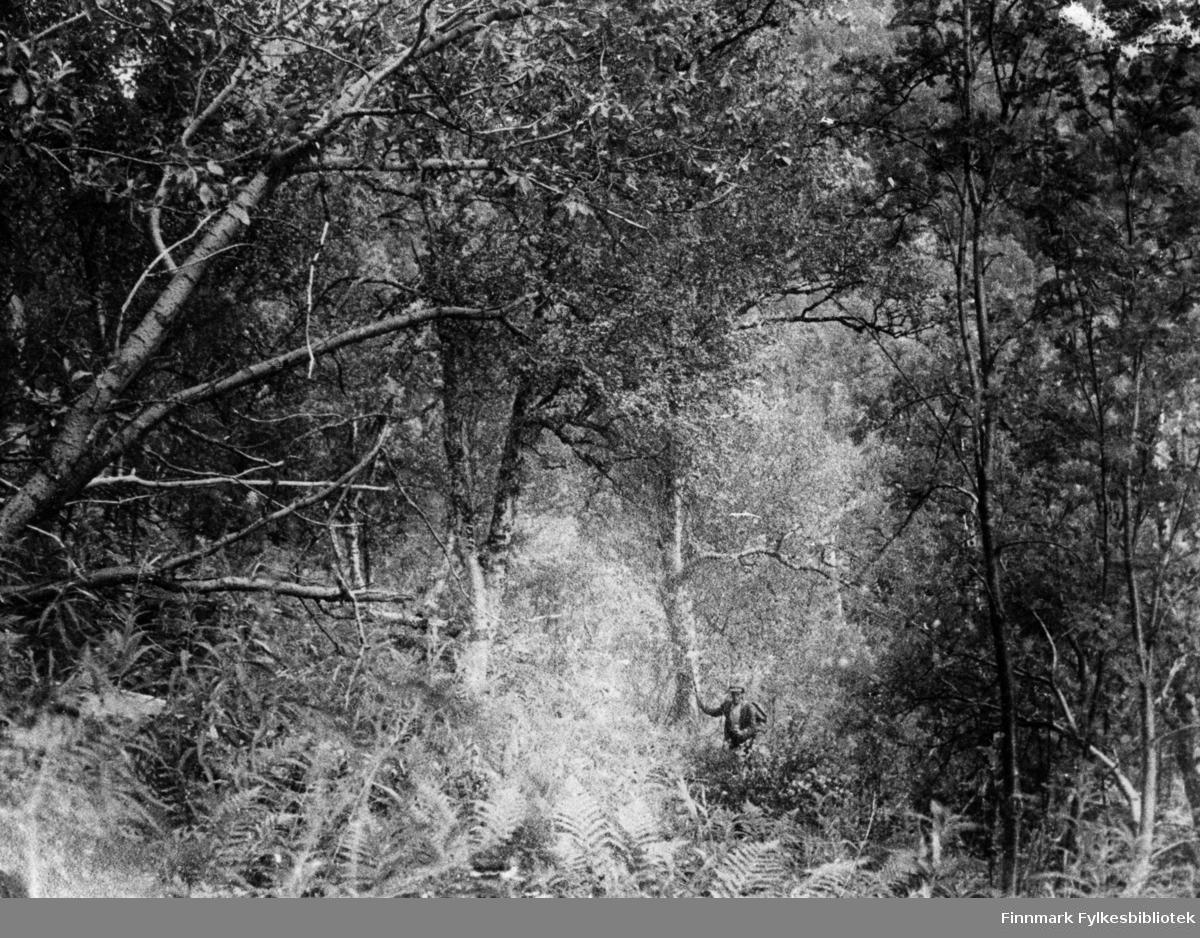 Urskog ca 200 m.o.h i Leirbotn. 70' 10' n.b.
