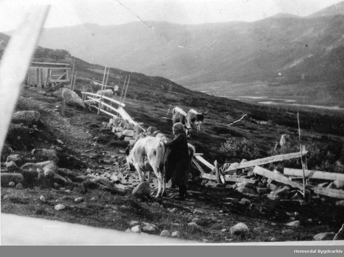 Hustadstølen i Hemsedal, kring 1930. Budeia er Sunnev Finseth
