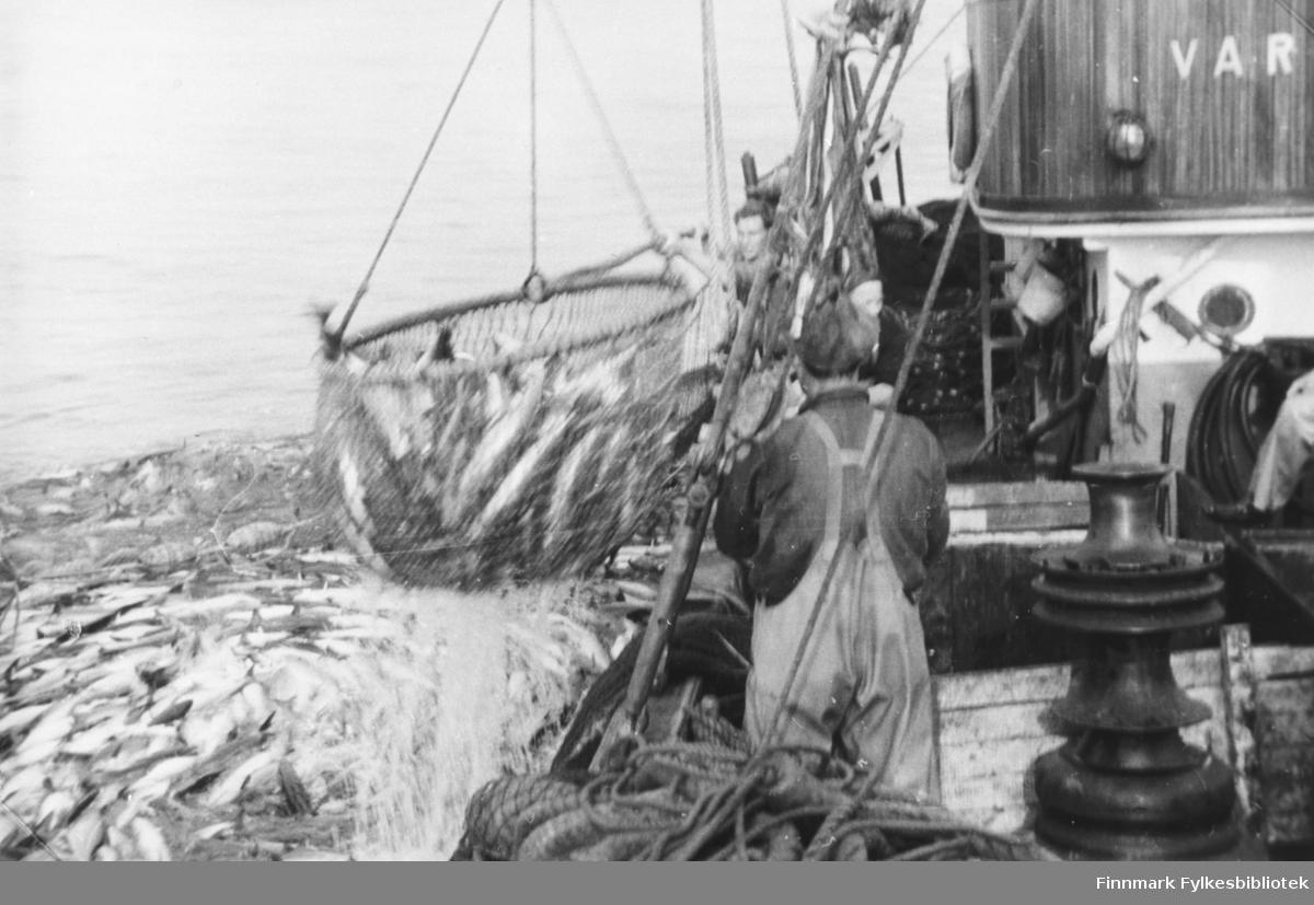 Lofotfiske med notbåten Varfjell, 1953 - B 5710
