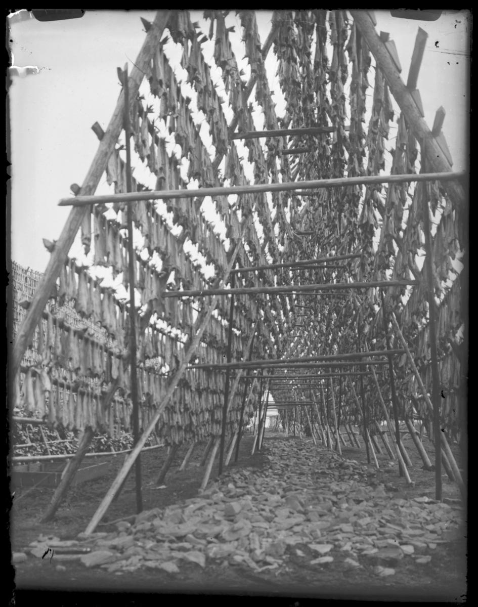 Fisk til tørk på hjeller. Fotografert fra undersida, og det ligger masse stein stablet på bakken inne i pyramidehjella