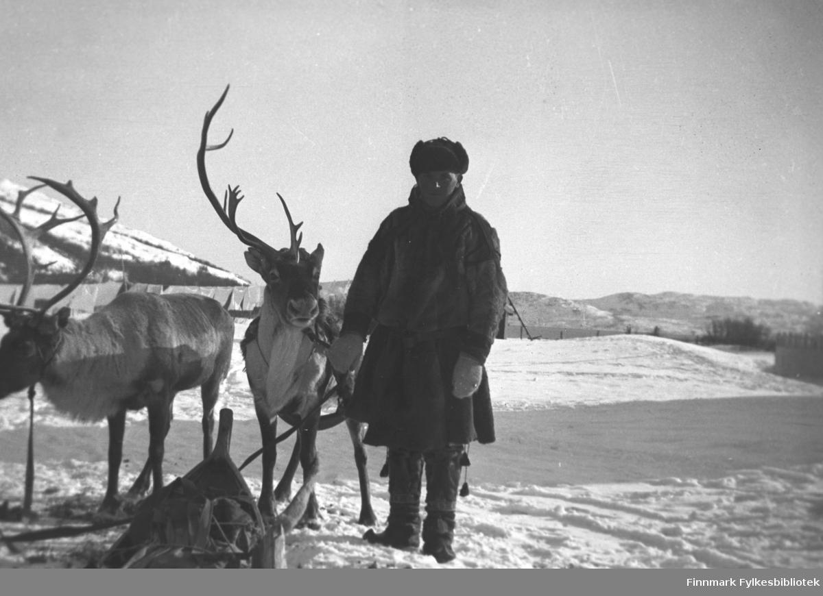 Leif Mikkola med kjørerein på Mikkelsnes