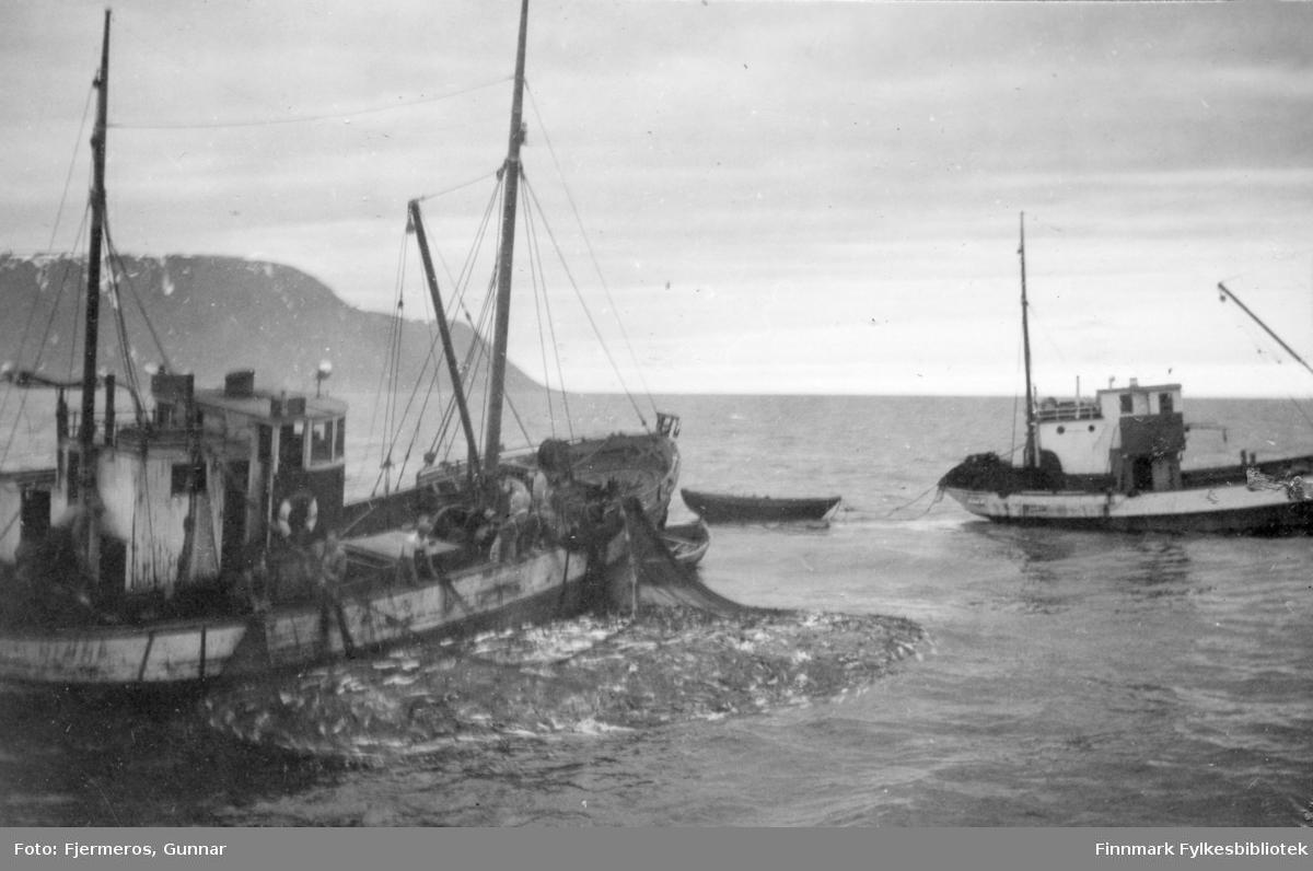 En fiskeskøyte med nota full av sei. Flere menn står på dekk og haler nota mens en annen skøyte passerer foran baugen. Personer og båt er ukjent, men bildet er tatt øst for Nordkapp våren 1948.