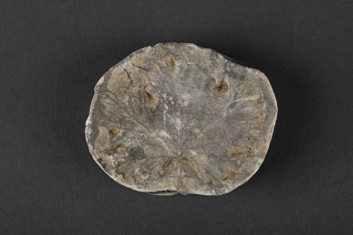 Bladmotiv, ligner blad fra et lønnetre.