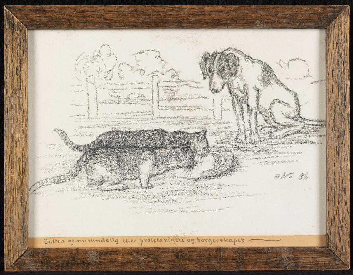 2 katter som spiser, hund som sitter og ser på; skigard.
