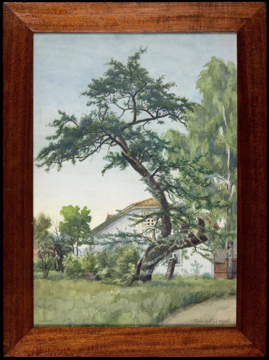Hage m. stort gammelt tre, busker, gress, gavlside av hvit 1 1/2-et. hovedbygn.