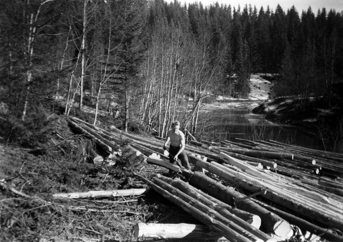 Barking av tømmer ved Leirelva.Bjarne Frogner ivrig m/barkspade