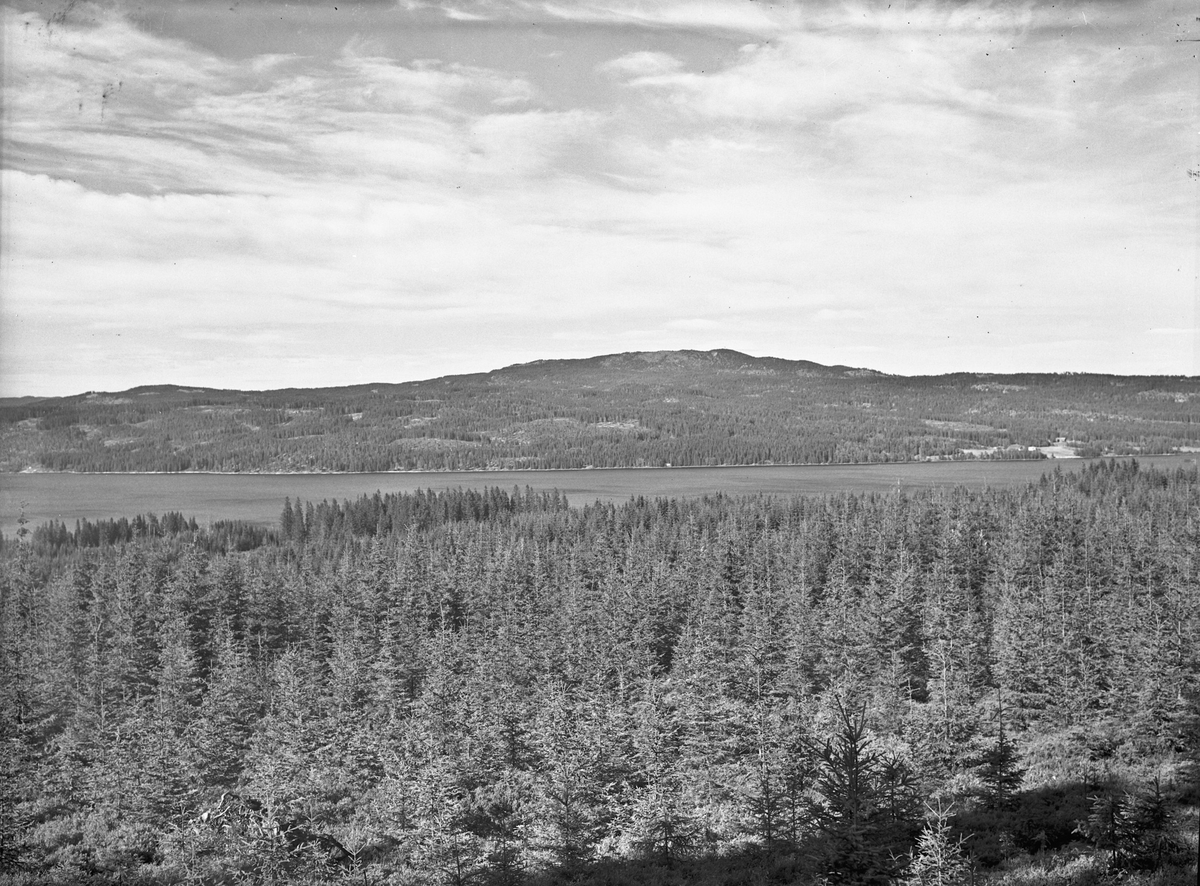 Plantet skog. Ved Hurdalsjøen?