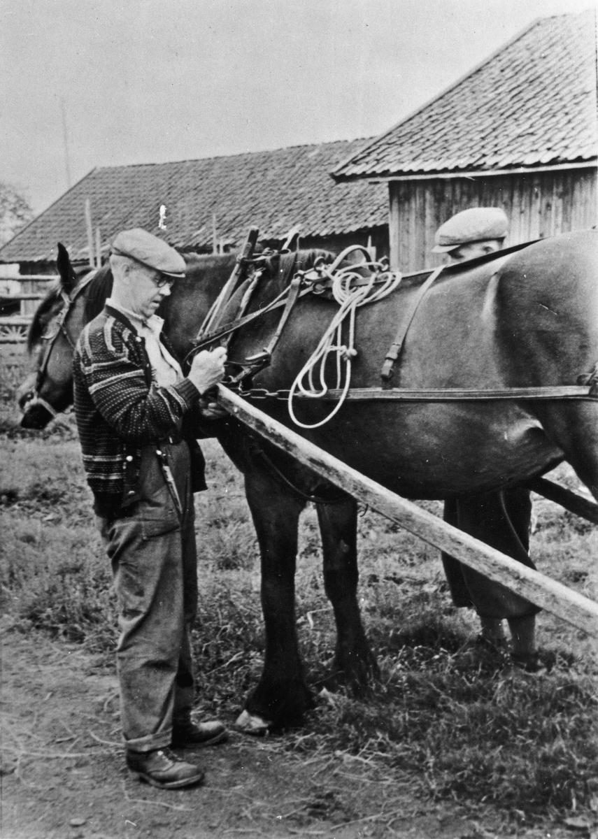 Forspenning av hesten.