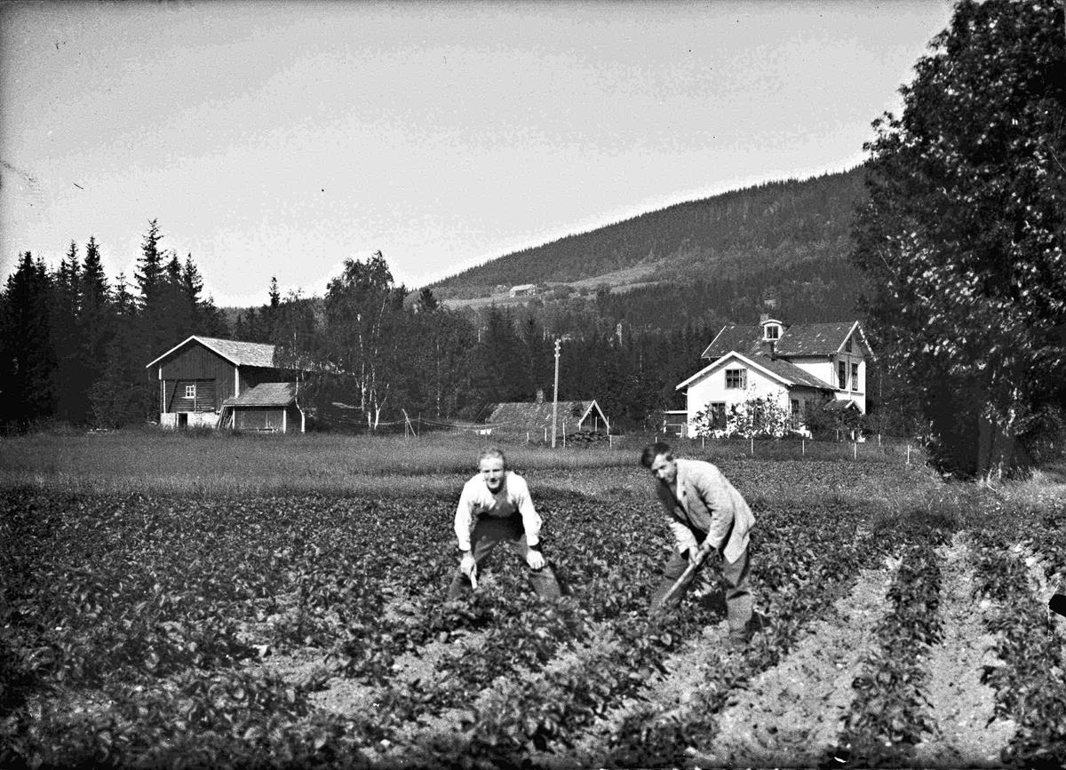 Potetopptaking ved Strømmen gamle skole i Hurdal