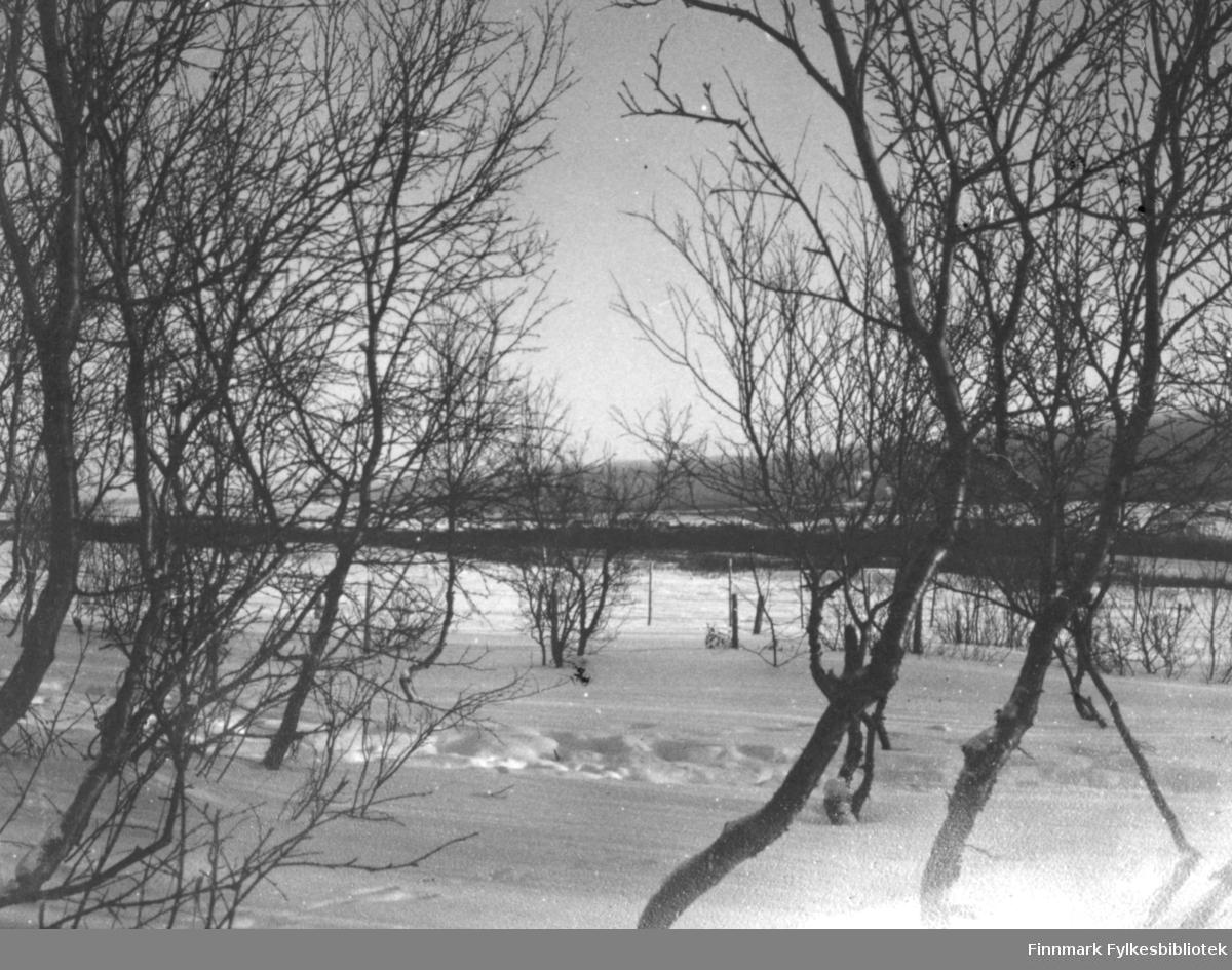 Vintermotiv med sne og trær.