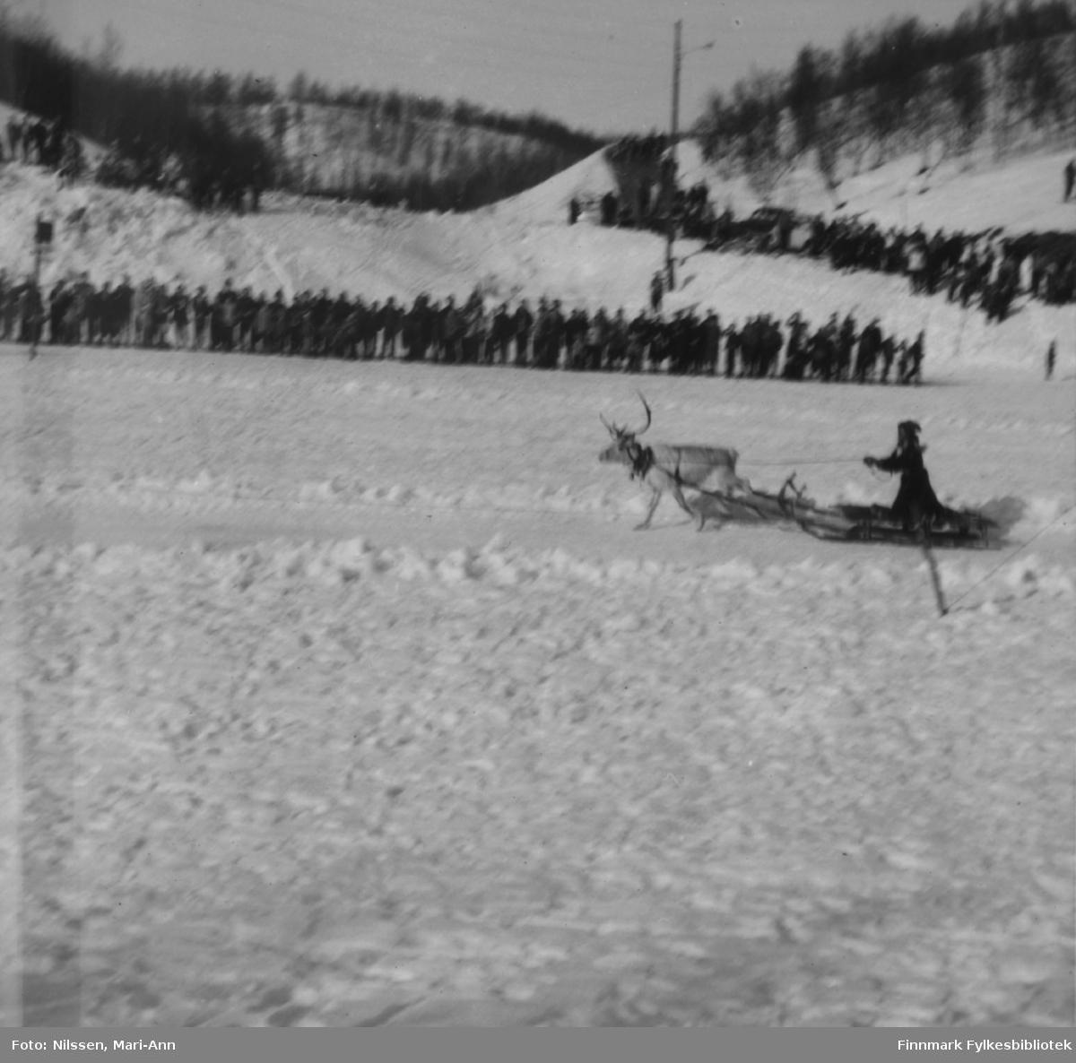 Katrine Jefremoff fra Sevettijärvi under reinkappkjøring på elveisen ved fjellstua i Neiden, 1964. Katri vant kvinneklassen dette året. Det var rene folkefesten i Neiden under reinkappkjøringene som ble arrangert på 1950- og 1960-tallet