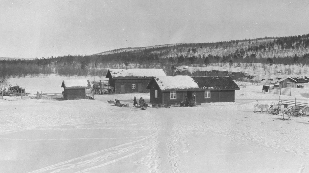 Bæivasgidde fjellstue i Karasjok fotografert i april trolig i 1919. Det står noen mennesker ved hyttene. En liten flok kjørerein hviler ved gjerden. Det ligger flere sleder rund hyttene.