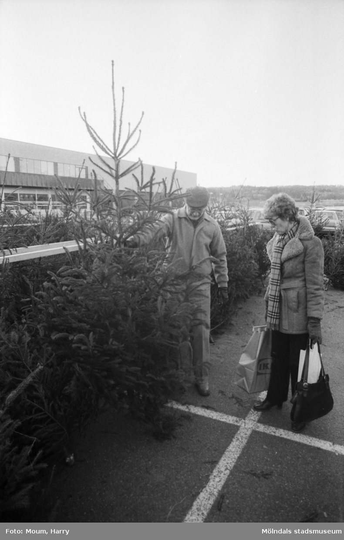 """Försäljning av julgranar utanför i IKEA i Kållered, år 1983. """"Birgitta Lundin och Gunnar Engelbrektsson tittar på julgranar.""""  För mer information om bilden se under tilläggsinformation."""