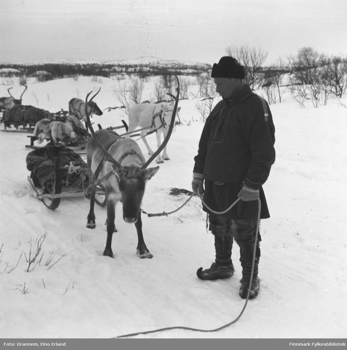 Emil Alfred Kaarret står foran flere kjørerein. Emil Alfred og kone Aune Katri Paltto bodde i Kyynelniemi ved Inarijärvi ( nord ved Enaresjøen).