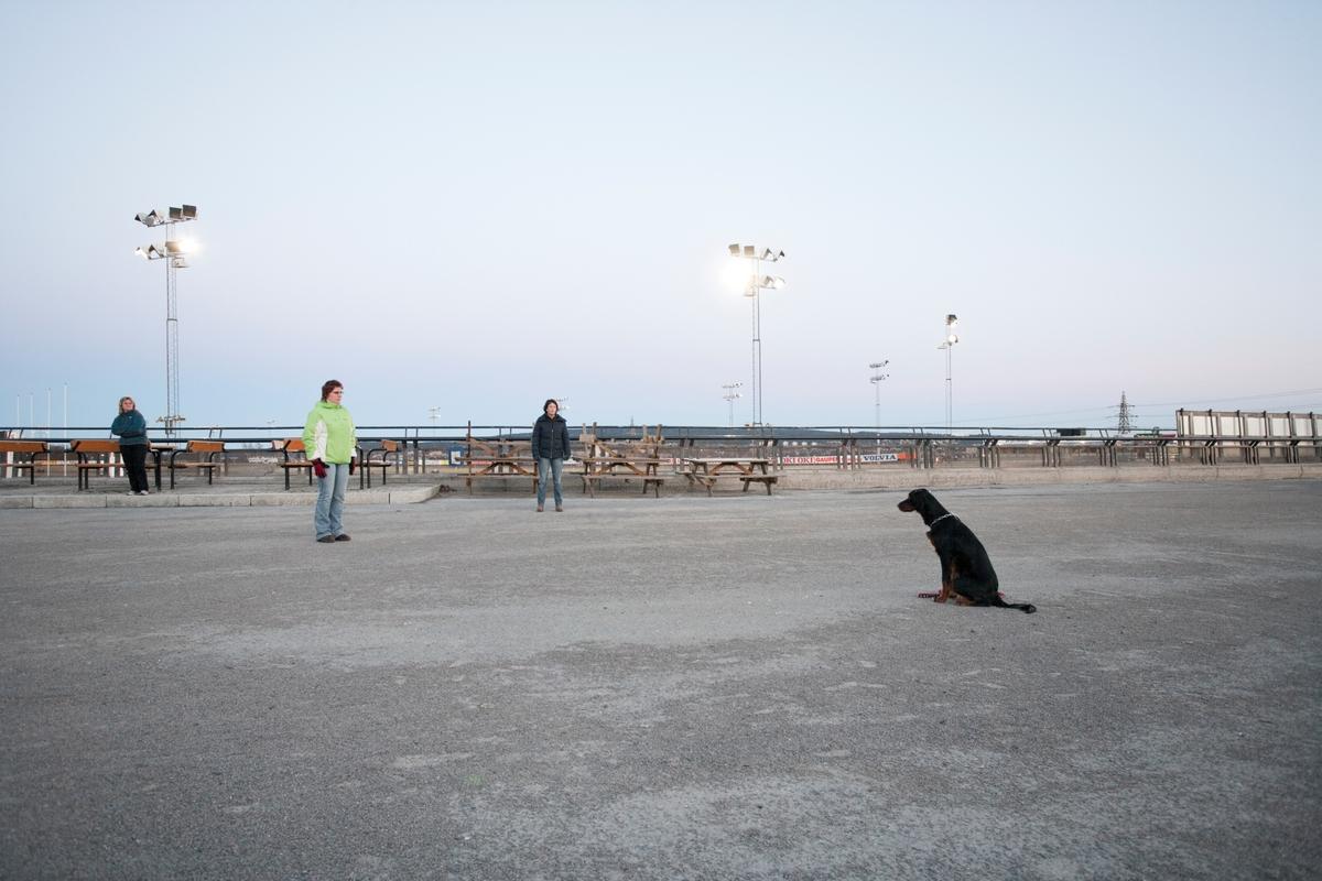 Dressurskurs for hund. Hund venter på kommando.