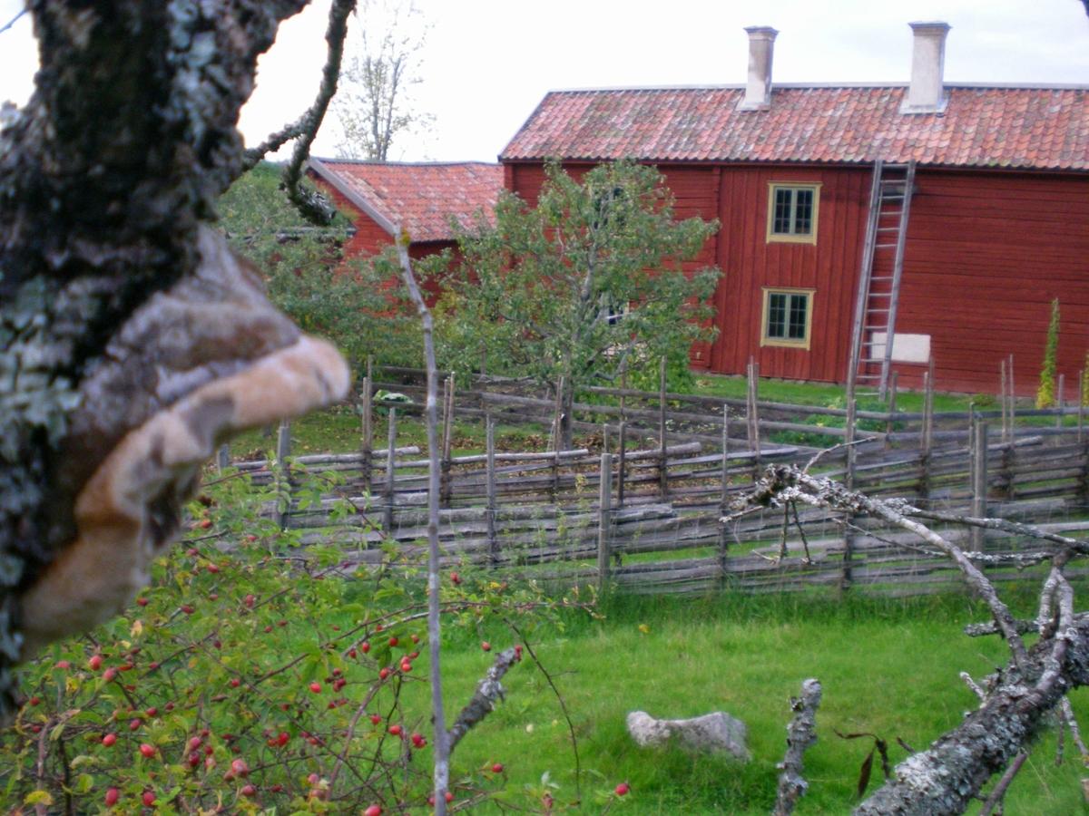 Nyvlastugans baksida med gärdesgårdar och köksträdgård, på friluftsmuséet Disagården, Gamla Uppsala, Uppland 2 oktober 2008