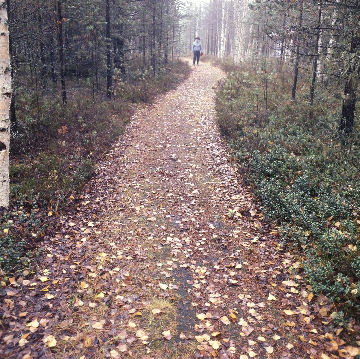 Författaren Albert Viksten på höstpromenad i skogen.