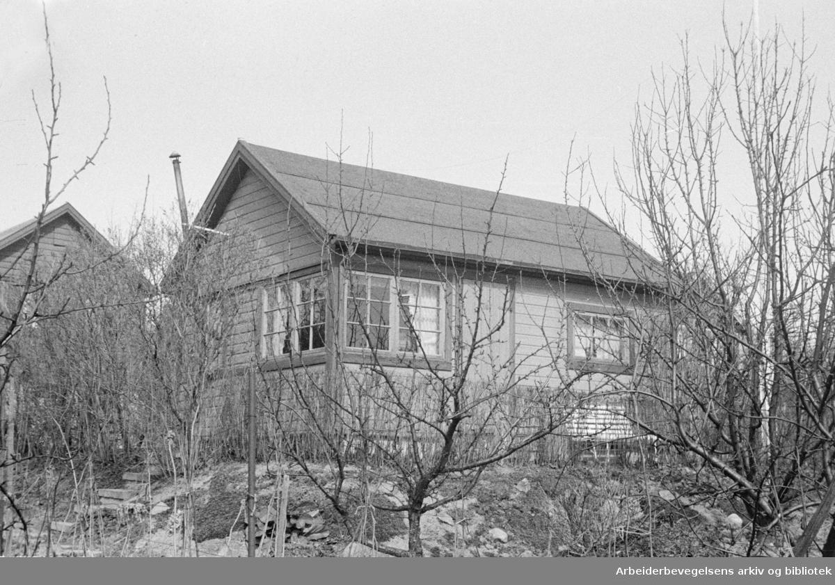 Solvang Hagekoloni. 1946