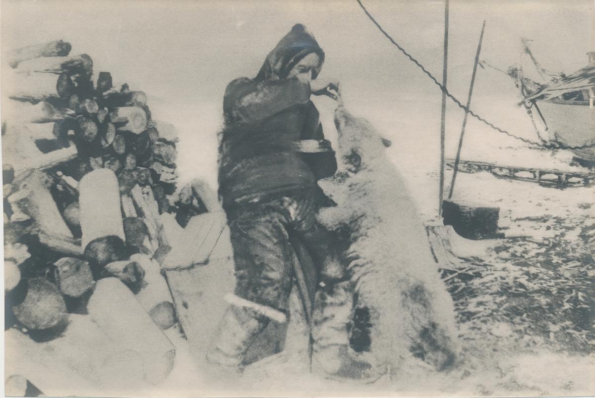 Fotografi av Roald Amundsen mater isbjørnunge Marie