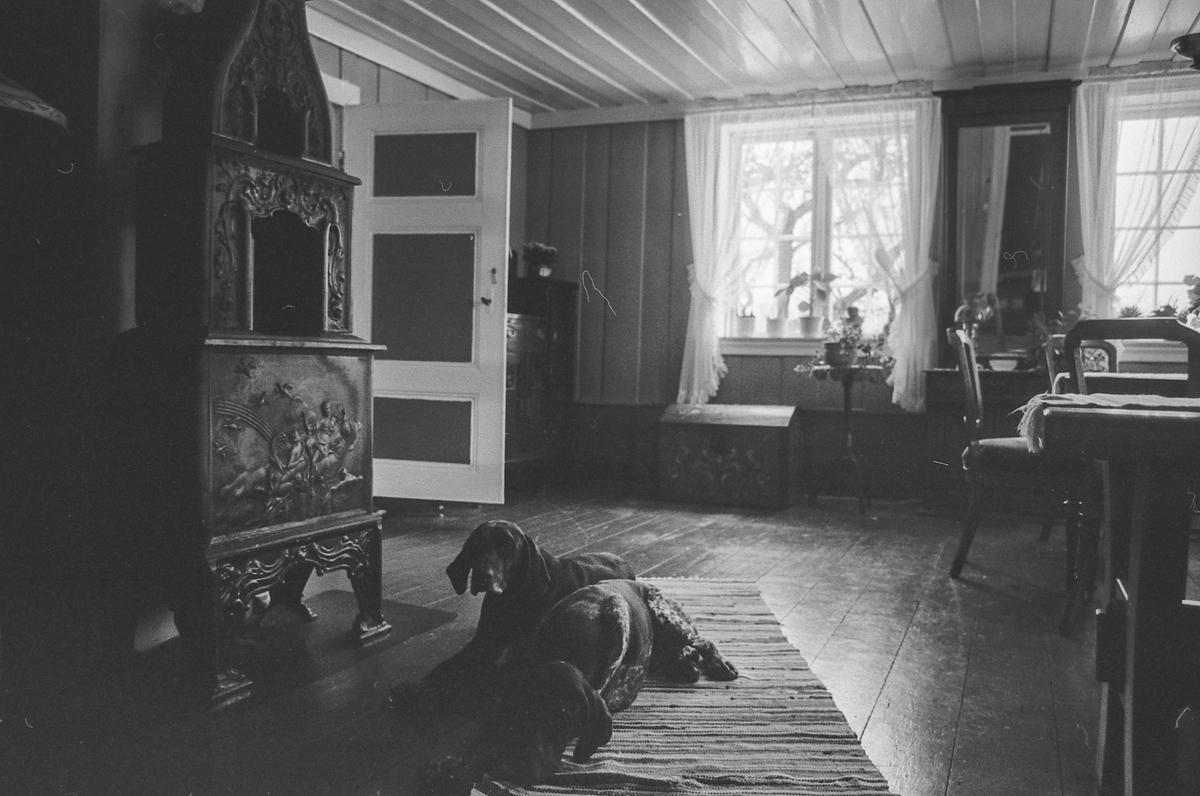 Vernepris til Bente Hagen og Morten Strand på Vestre Torp i Vestby. Katt i vinduskarmen.