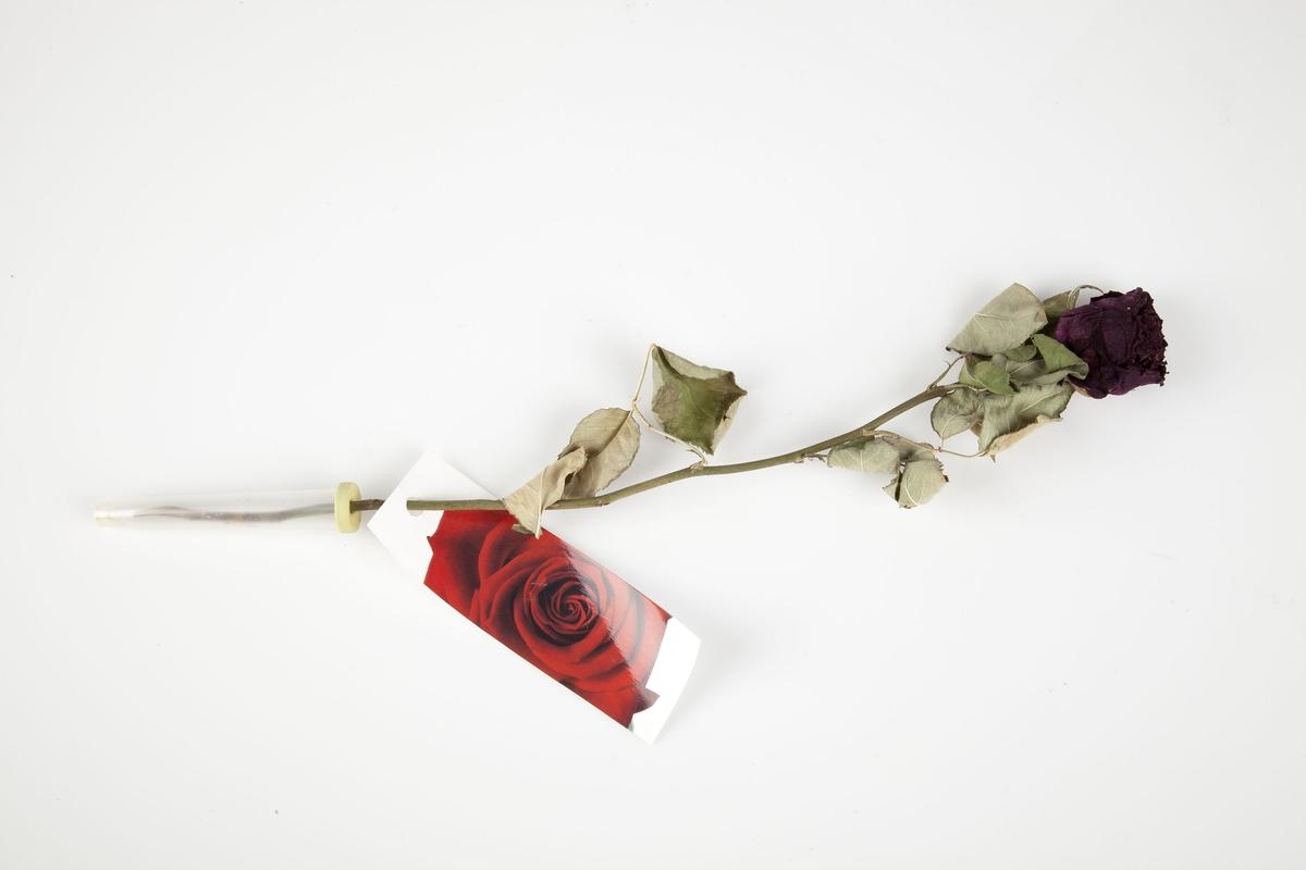 Kort: rød rose