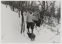 Tre menn på skitur i skogen med hund