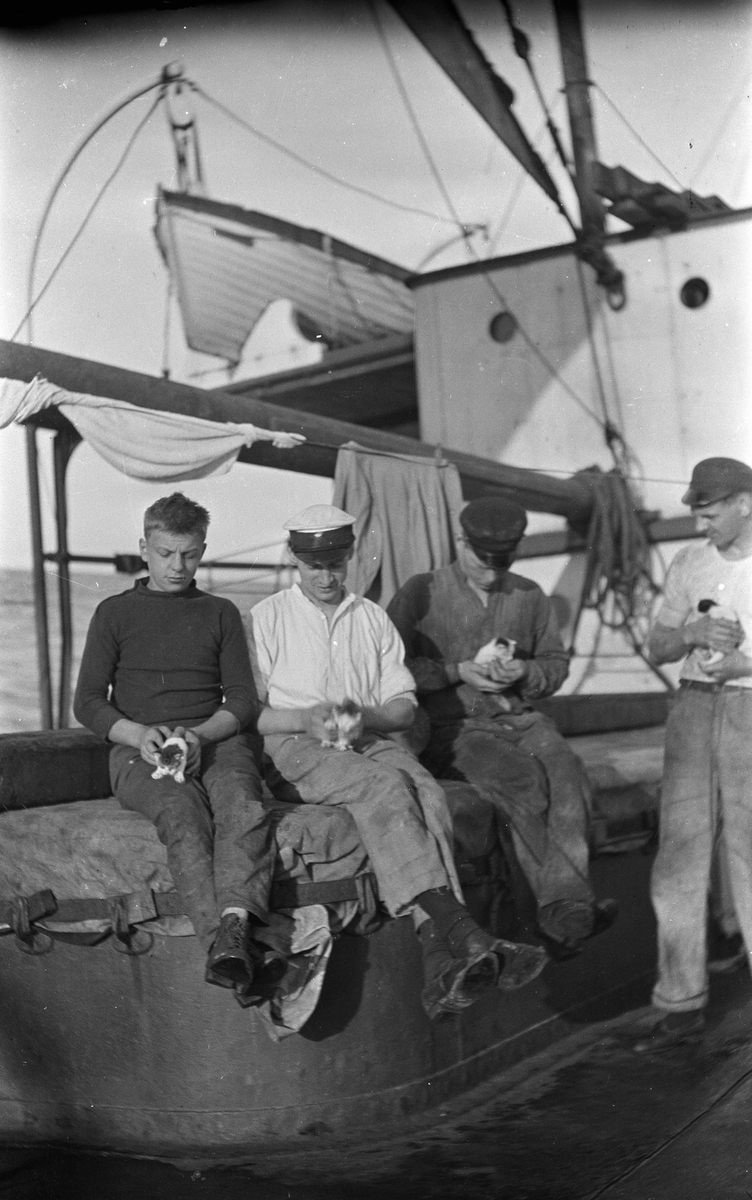 Fire menn med hver sin kattunge i fanget, på dekk på DS STORFOND, stuert Lars Johansen nr 2 fra venstre.