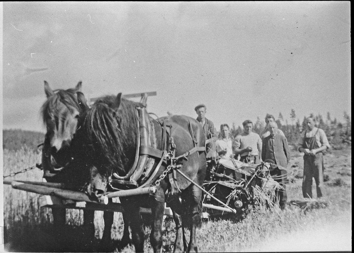 Skuronn på Østre Blegeberg, ca. 1945. Sjølbinder dratt av to hester. Jørgen Ravnås, Olav Gunnerud, Arne Albjerk, Nils O. Albjerk (bak), Ole N. Albjerk, Gunvald Albjerk