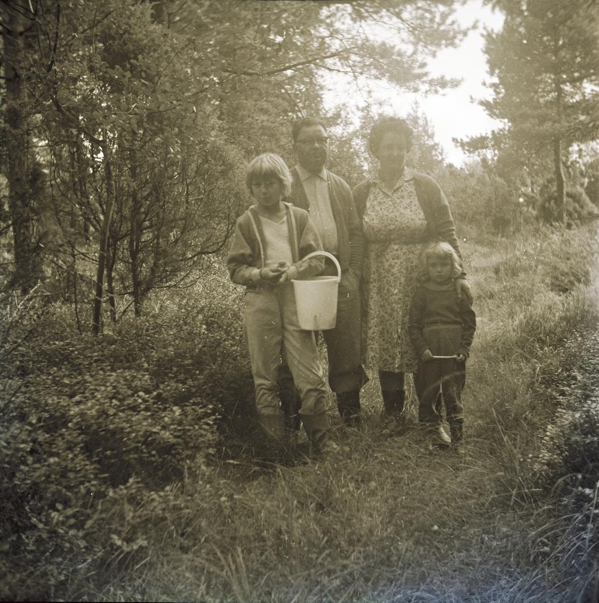 En familj på svampplockning i blåbärsskogen: föräldrarna Karl och Britta med döttrarna Lotta, som bär hinken och håller upp en kantarell, och lillasyster Mari-Ann.