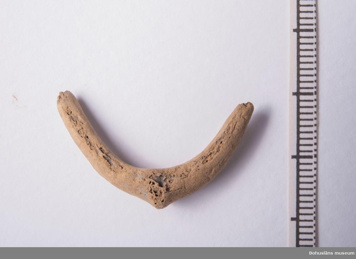 """Nyckelben av garfågel, Pinguinus impennis, intakt?  Materialet kommer från ett äldre mesolitiskt lager, från den s k """"Djupa gropen"""", daterat:"""