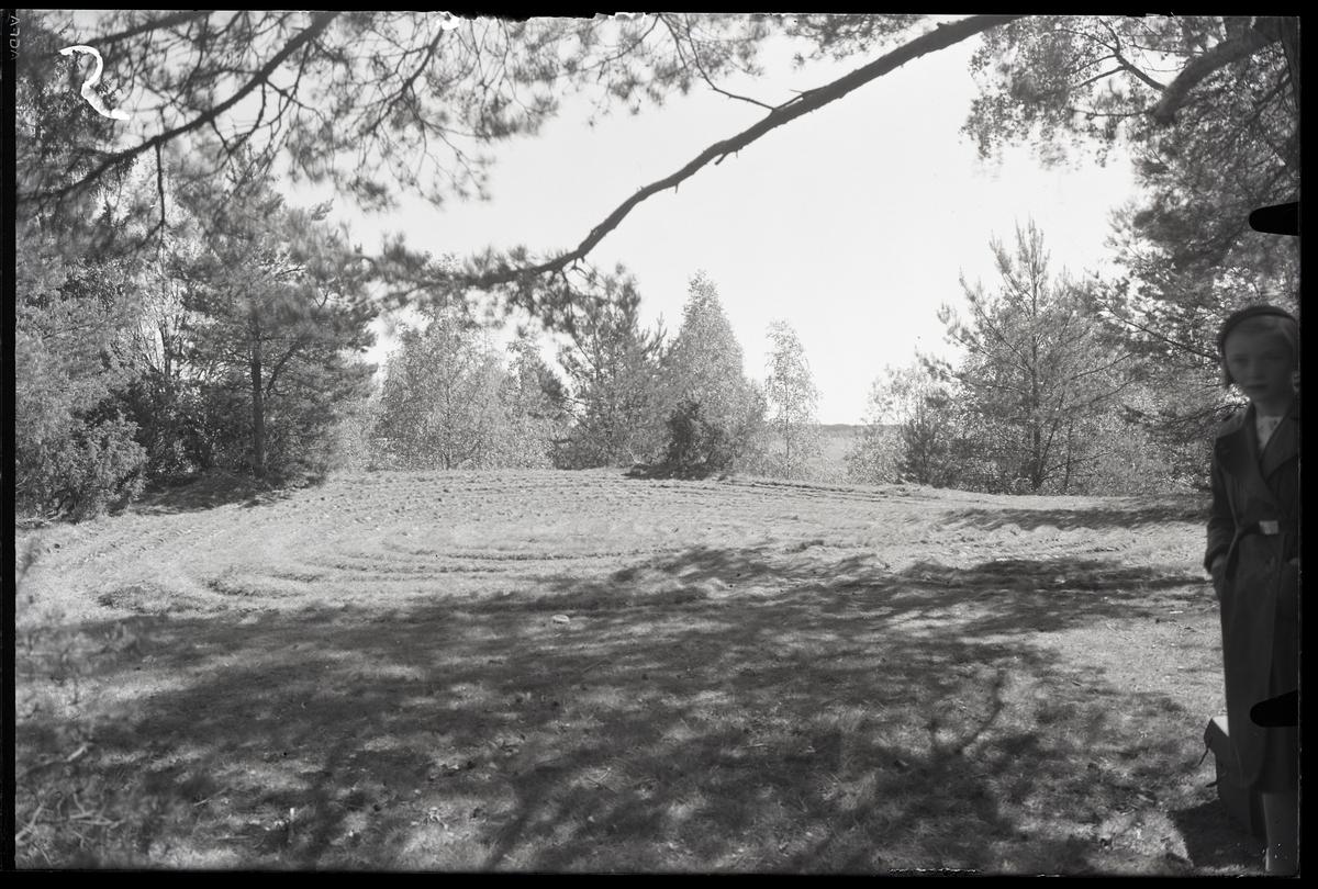 Labyrint Trojeborg på Badelundaåsen vid Tibble, Västerås.