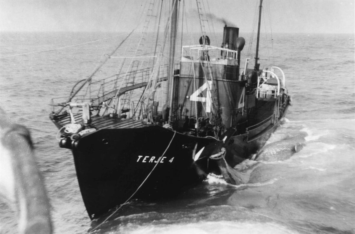 """Norsk hvalfangst i arktisk farvann. Hvalbåten """"Terje 4"""" frakter hvalfangst."""