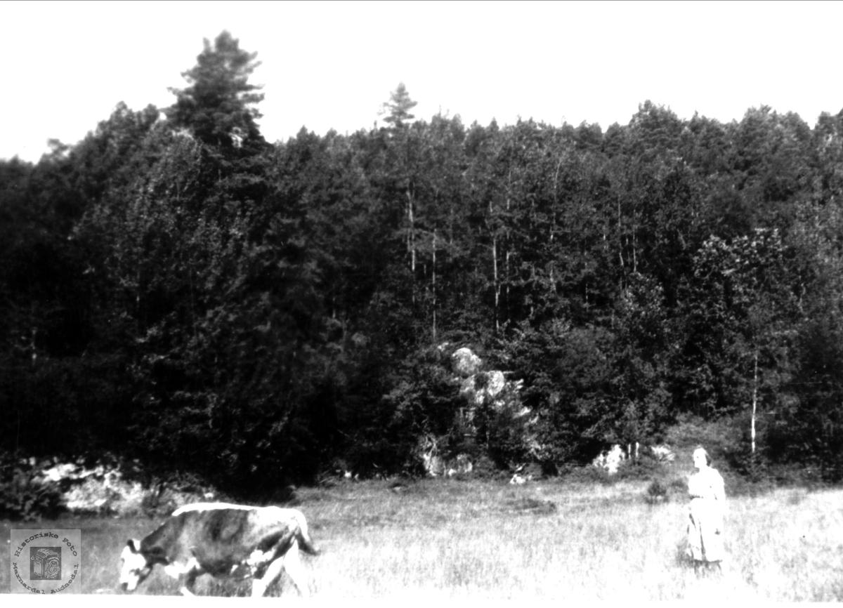 Maria Røynestad med buskapen, Bjelland.