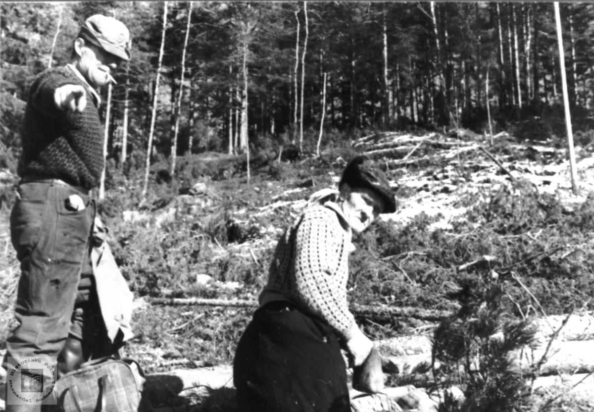 """Tømmeret blir """"berka"""" før det blir sendt på elva. Øvre Homme Bjelland"""