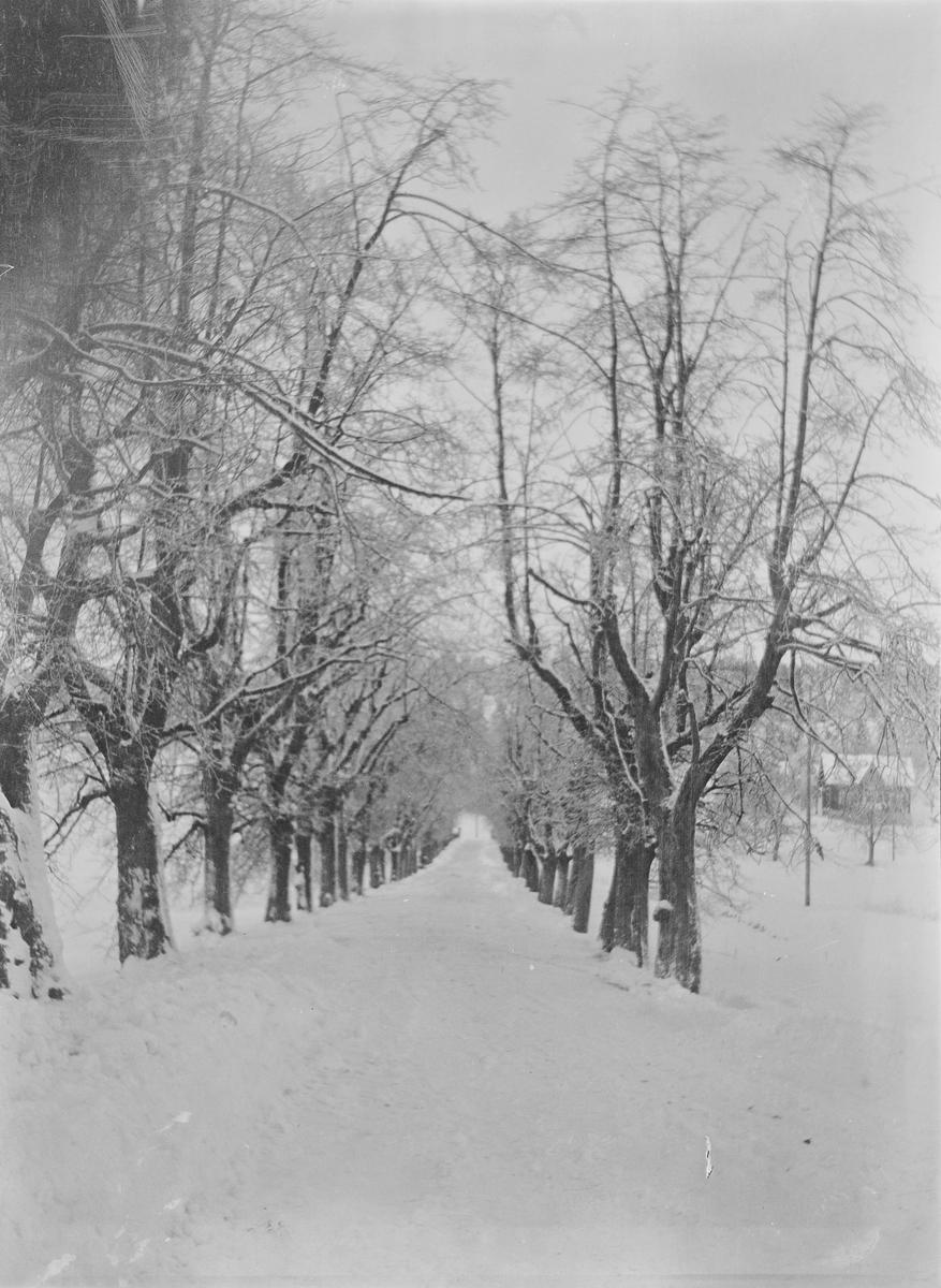 Lindealléen på Linderud gård sett i retning fra hovedhuset. Veien og trærne er dekket av snø og rimfrost. Annen bebyggelse sees i bakgrunnen.