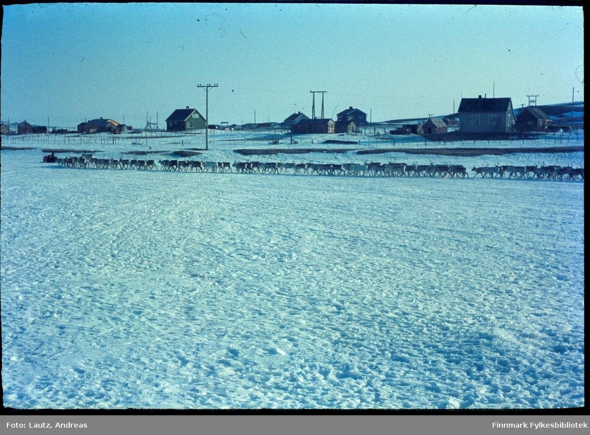 Kautokeino i 1969. Vårflytting på elva.