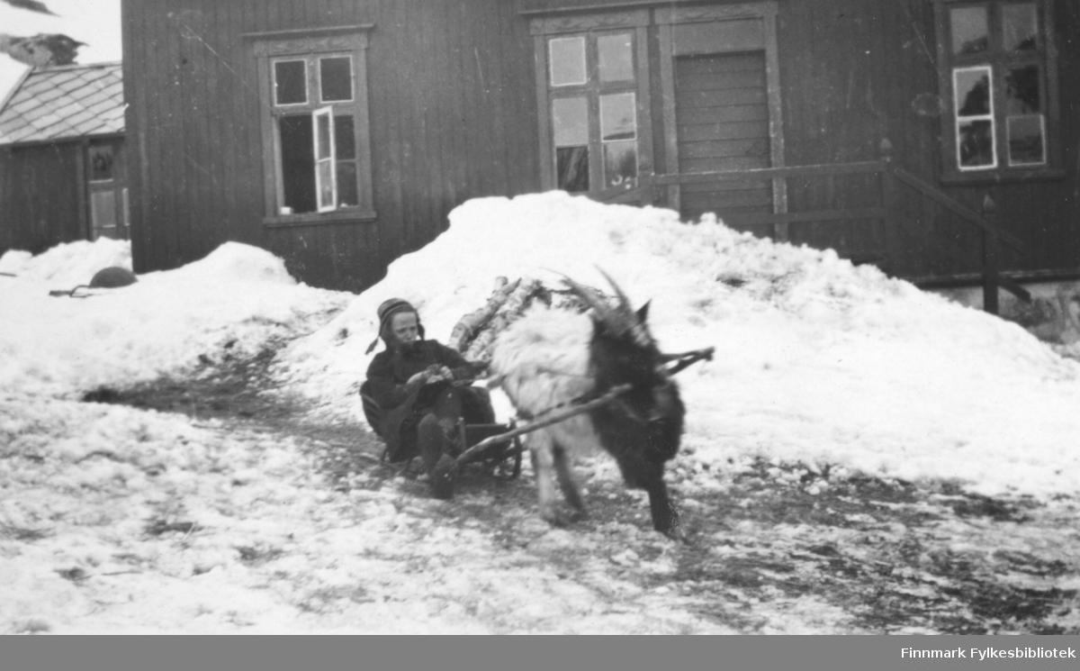 Skrivergaarden mai 1917. Ref. FBib. 01010-106. Ebba og Bukken, 1917.