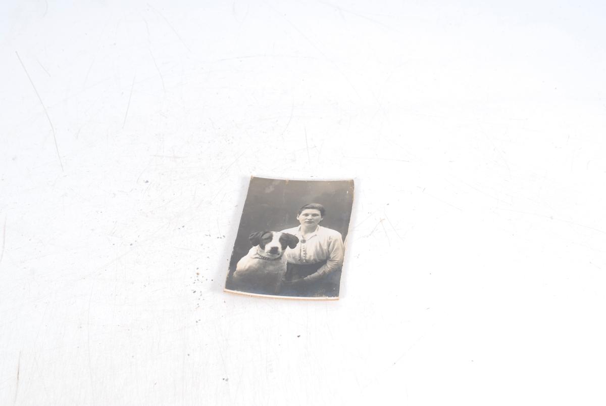 vikingskip med dragehoder og fotografiet som oval utskjæring i seilet.