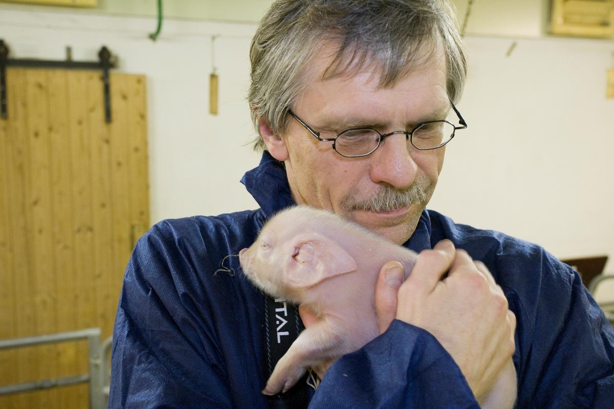 Konservator med nyfødt grisunge