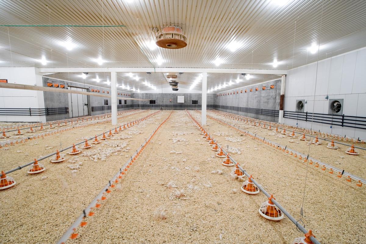 Foringsautomater og kyllinger i kyllingefarm