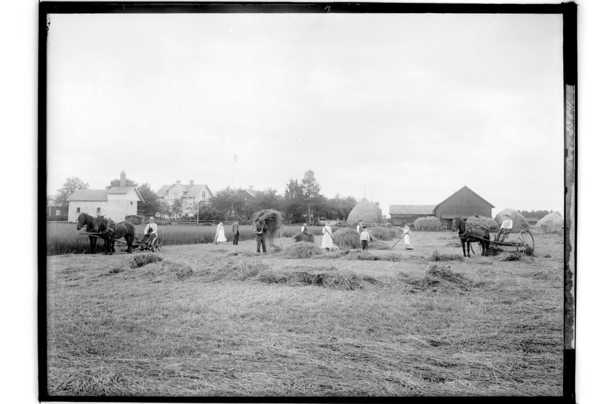 Höslåtter. 10 personer, 2 hästar för slåttermaskin, 1 häst för hästräffsa. En och en halv plans bostadshus och ekonomibyggnader.A. Wennerlund.