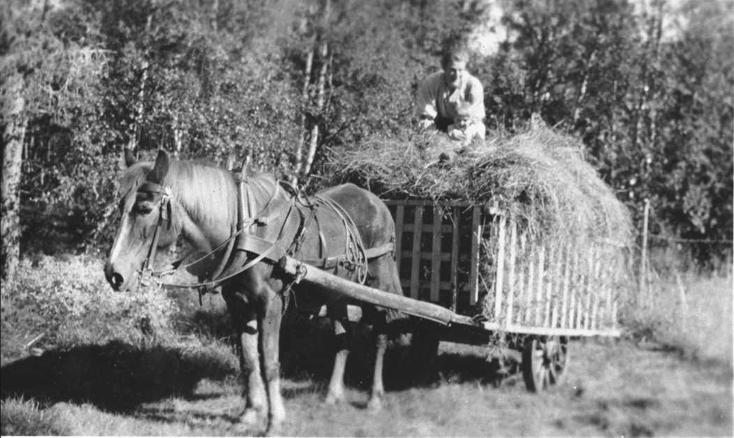Peter Barstad, hest, høyvogn.