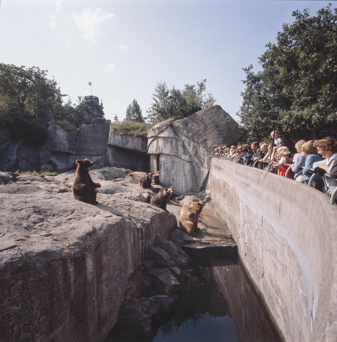 Skansens gäster tittar på brunbjörnarna på Björnberget.