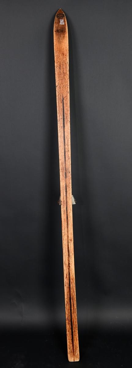 Spisst butt oppbøyd horn. Oversiden svakt avrundet med skarpt markert avrundet rygg og fotsted. Tverr bak.
