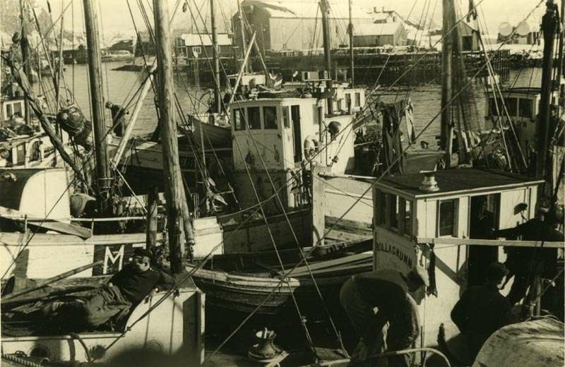 Fiskebåter i havn