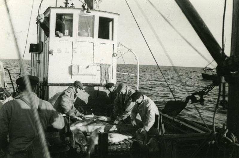 Arbeid på fiskebåt