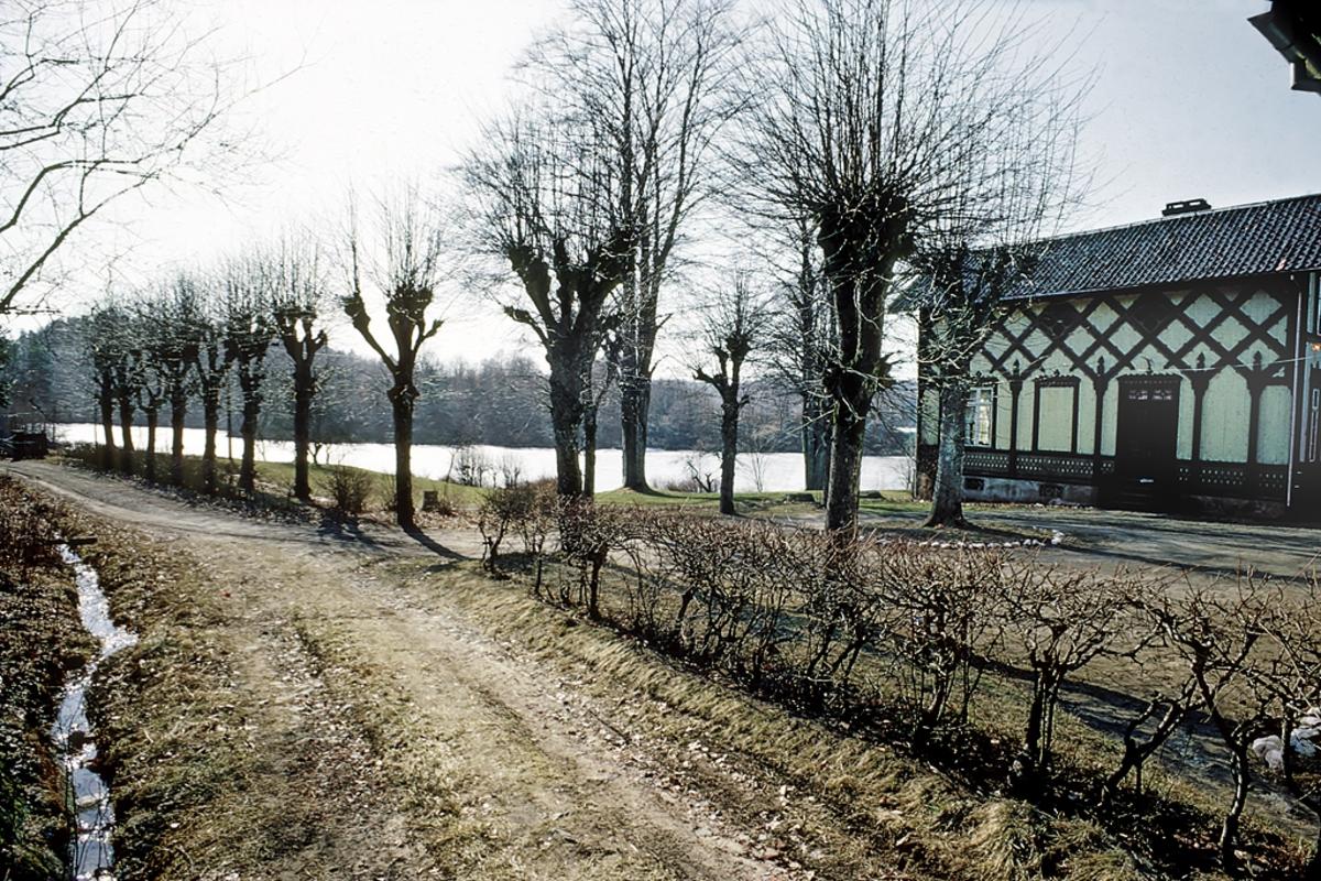 Frednes. Hus i sveitserstil.  Landsted ved Longumvannet. Alle langs vei, rekke med beskjærte trær.